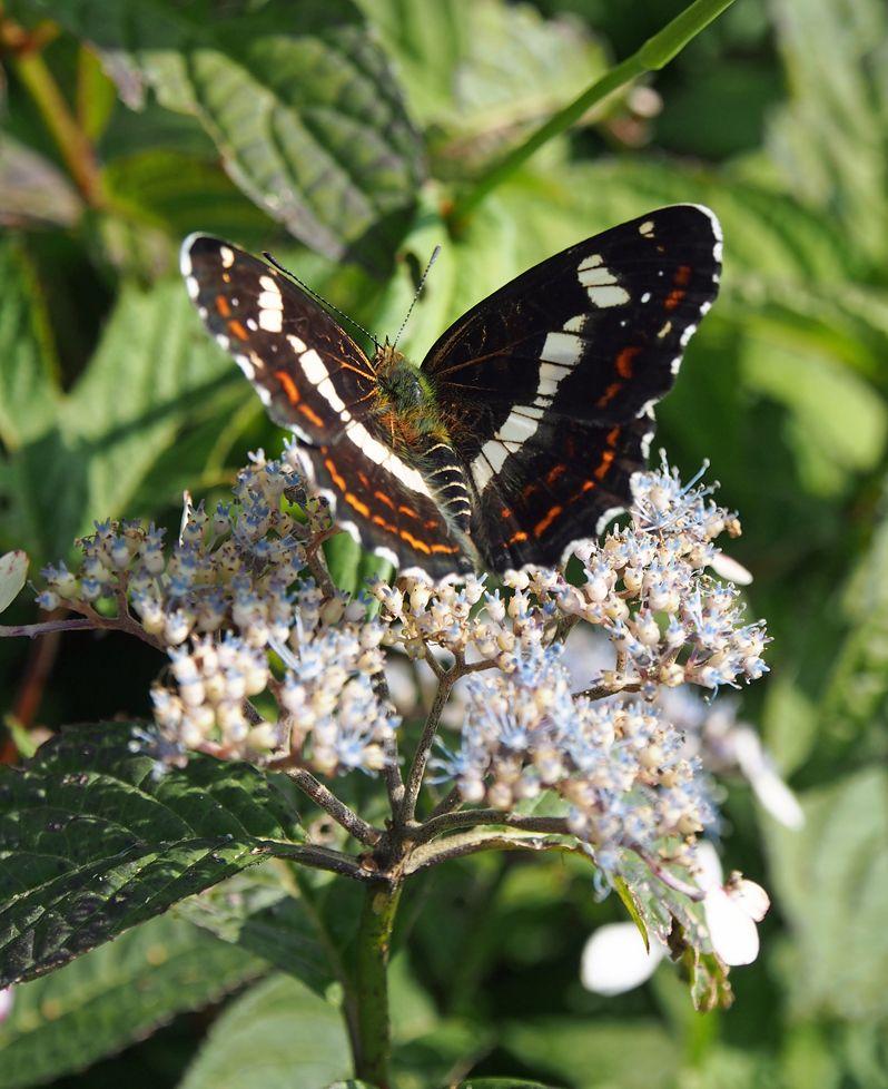 花と共に美しい蝶も観察しよう!