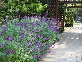 「堺市都市緑化センター」は無料の小さな植物園!