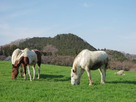 首都圏からアクセス至便な動物の楽園!神奈川「服部牧場」をみんなで楽しもう