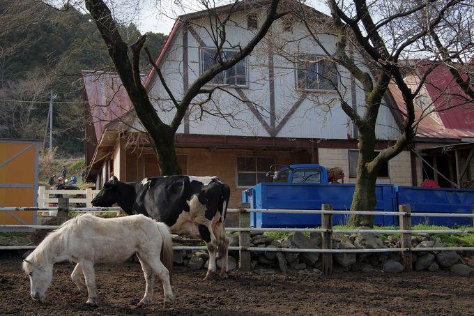 ホルスタイン牛舎のあたりは、絶好のカメラスポット