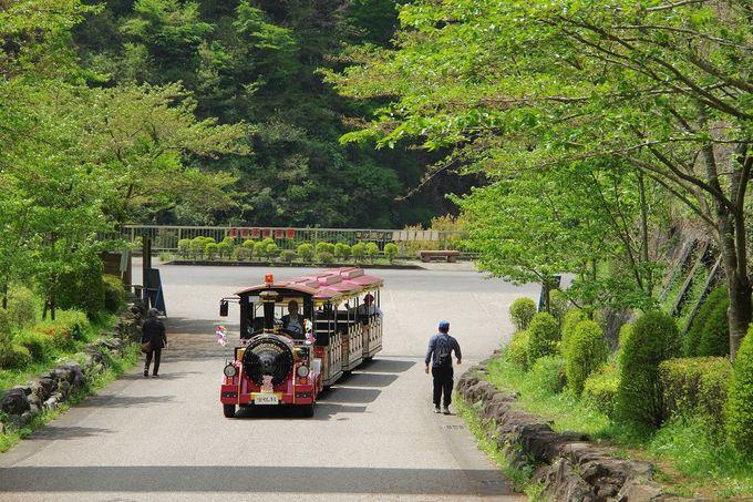 緑豊かなあいかわ公園を歩きましょう