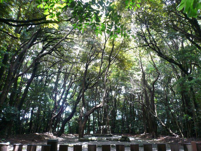 三女神が祀られる総本山「宗像大社」