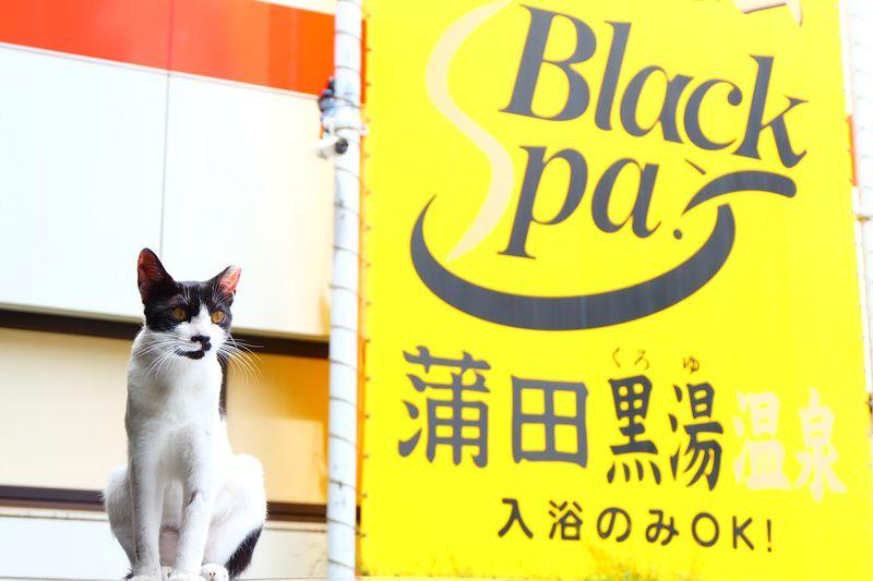 ネコも人気!都心で楽しむ蒲田黒湯の天然温泉「ホテル末広」