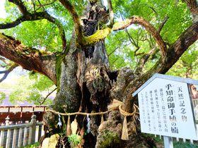 優美な瀬戸内海に浮かぶ愛媛・大三島に鎮座する「大山祇神社」|愛媛県|トラベルjp<たびねす>