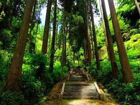 福岡・星野村の高台にそびえる静寂な「室井熊野神社」は心して参ろう|福岡県|トラベルjp<たびねす>