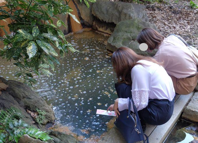 神戸という地名はここから!縁結びの神様「生田神社」