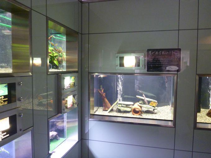 三河地区唯一の淡水魚の水族館「ぎょぎょランド」
