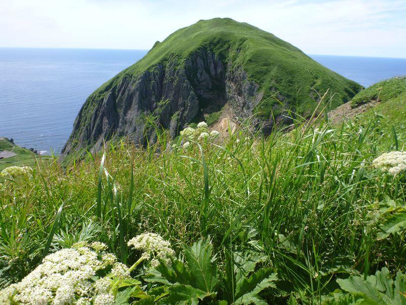 花の浮島 礼文島 手軽に高山植物と絶景を堪能できる桃岩展望台