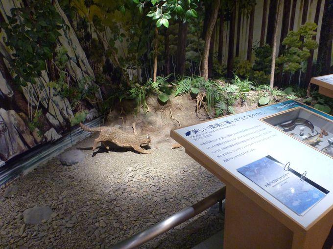 対馬野生生物保護センターとは