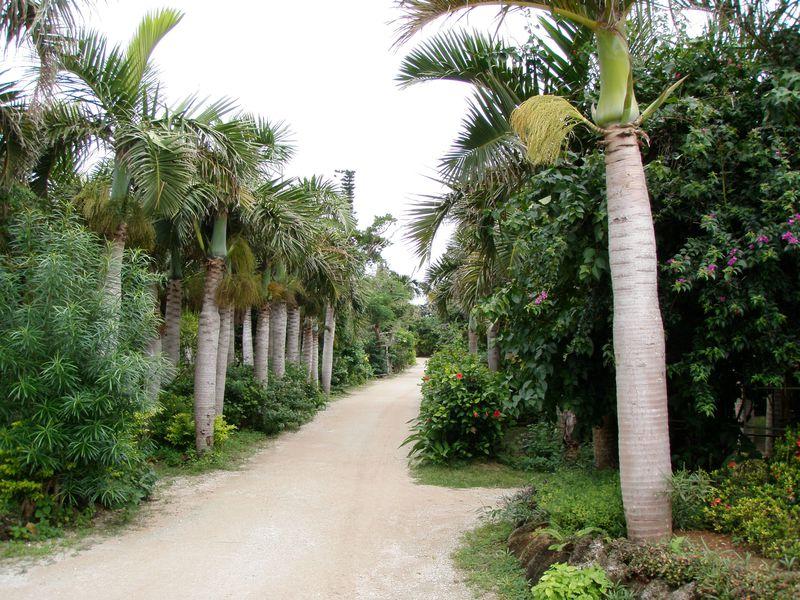西表島から一歩先へ!由布島は亜熱帯植物のパラダイス♪