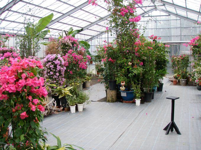 よくみるあの亜熱帯植物を比較してみるチャンス!