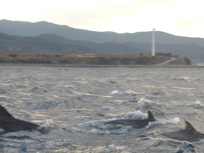 """野生のイルカに逢いにいこう!日本有数のイルカスポット""""天草""""で「イルカウォッチング」"""