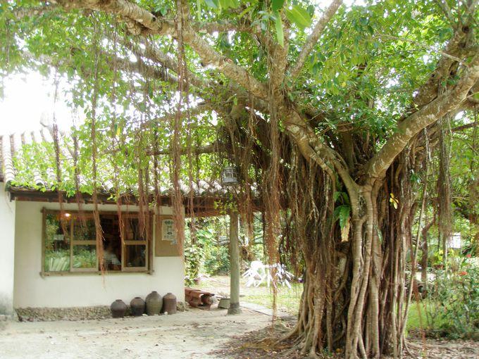 秘境、西表島にある沖縄らしいカフェ「唐変木」
