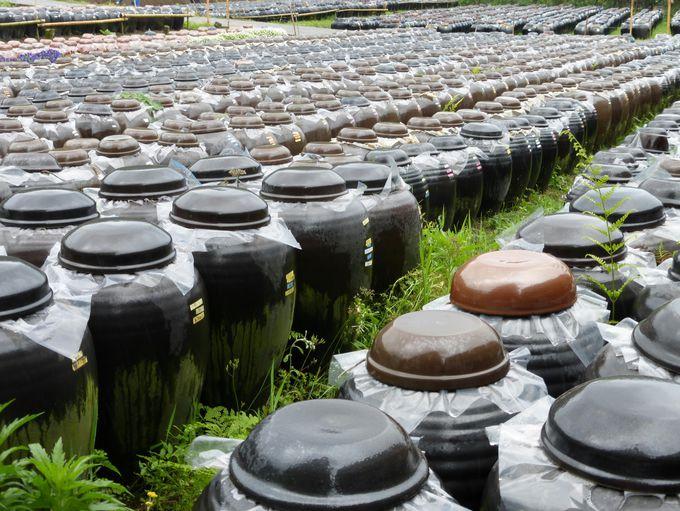 実は鹿児島の特産品!壷畑にギッシリ詰まった「黒酢」