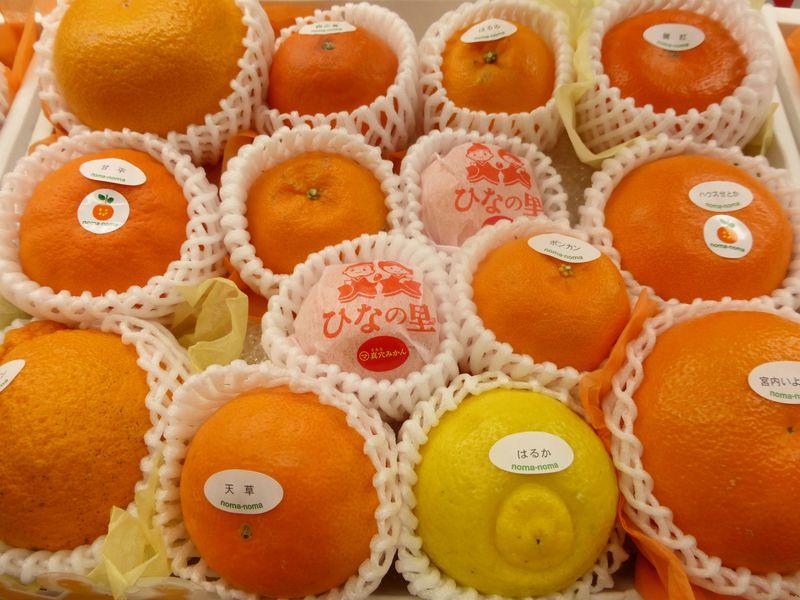 めくるめく美味しさ!柑橘王国・愛媛県で出会う絶品柑橘類