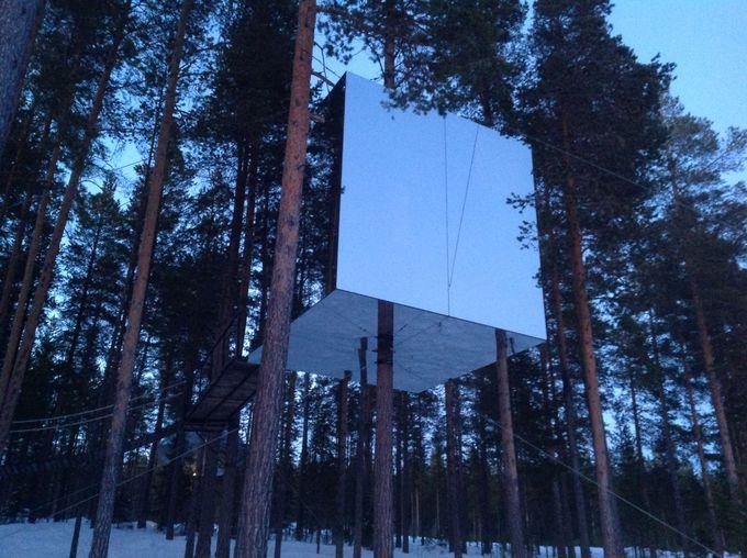 森と一体化!ミラーキューブの魅力