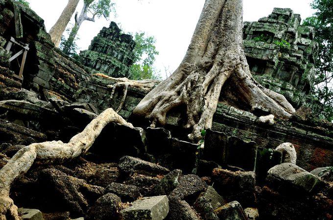 「ラピュタ」を思わせる、樹木による浸食