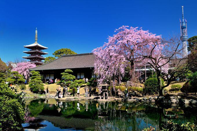 五重塔+東京スカイツリー+桜