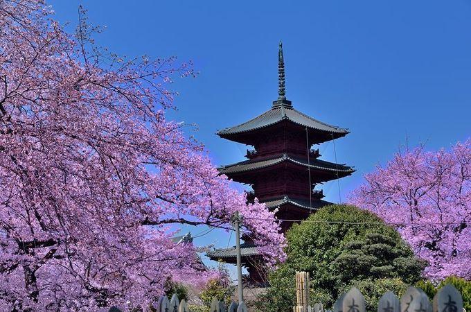 五重塔は関東最古で最大!