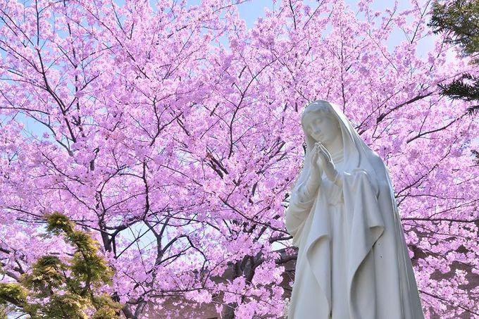 天守閣と桜、庭園と桜、教会と桜!神奈川で行きたい桜の名所3選