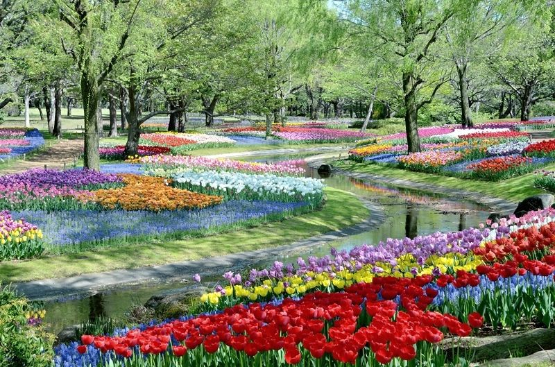 ここは東京?昭和記念公園(立川)のチューリップ畑が圧倒的に美しい!