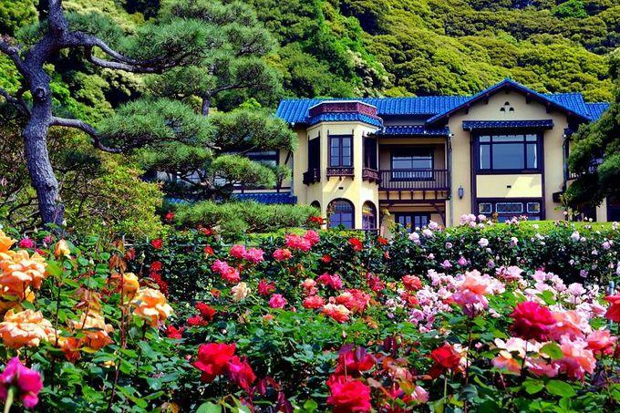 """春の「鎌倉文学館」は""""バラ色の館""""!"""