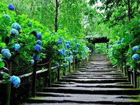 鎌倉観光で押さえたい! 専門家お勧めの名所・散策スポット28選