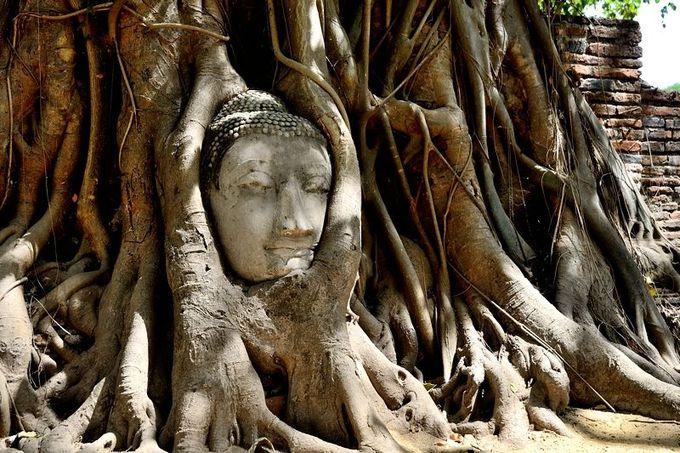 仏像の顔は、アユタヤの顔