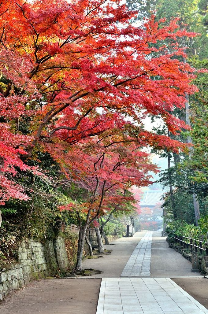 古都の秋!鎌倉五山第二位の円覚寺は紅葉の名所だった!