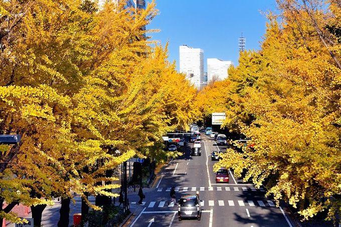 銀杏並木の見えるカフェも。秋に行きたい横浜「山下公園通り」と「日本大通り」