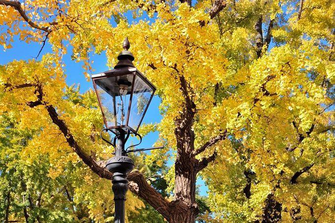 黄金の銀杏を背景に立つ文明開化の象徴「街灯」