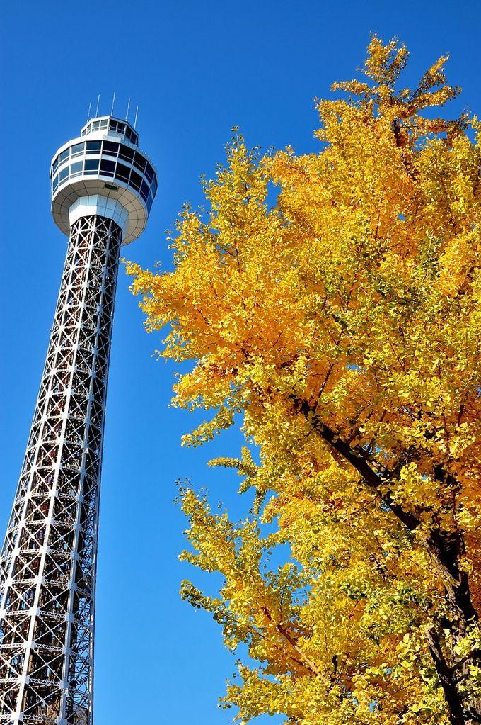 横浜マリンタワーと銀杏のコラボレーション