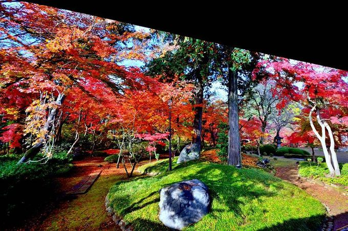 美しすぎる紅葉山庭園