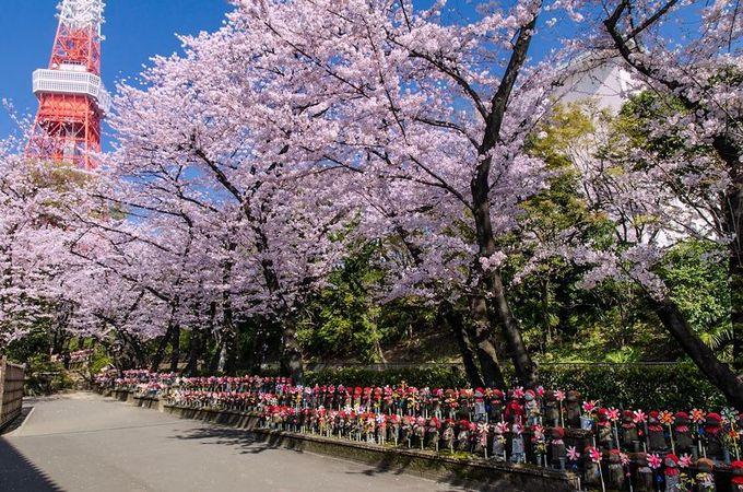 「千躰子育地蔵尊」と共に祈る桜