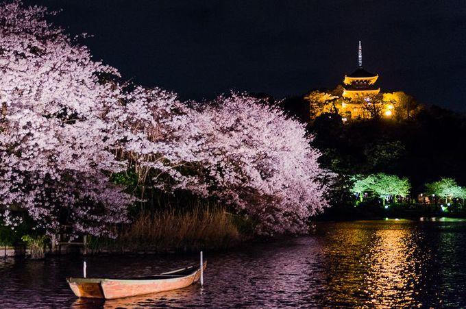 横浜で季節の花を楽しむ!桜・チューリップ・バラのおすすめスポット