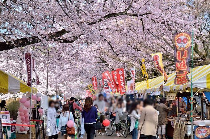 花見客で賑わう「小金井桜まつり」