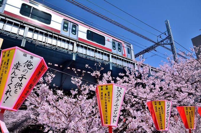 東急東横線の車両と桜の競演