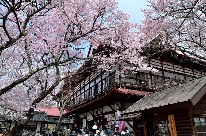 国登録有形文化財「高遠閣」も桜まみれに!