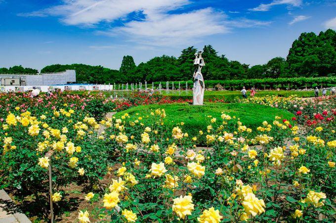 神代植物公園の「ばら園」