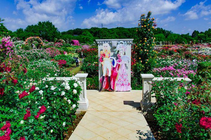 京成バラ園で楽しむ「ベルサイユのばら」