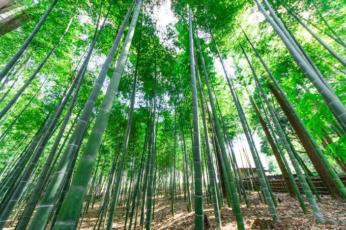 水戸の梅まつりも見逃すな!日本三名園に数えられる茨城観光スポット「偕楽園」