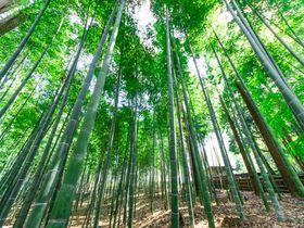 日本三名園!水戸観光の定番「偕楽園」の歴史と見どころをご紹介!|茨城県|トラベルjp<たびねす>