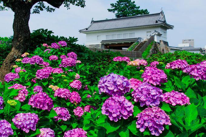花を楽しみレトロな遊園地で遊ぶ「小田原城址公園」