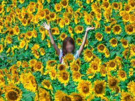 60万本の絶景!明野ひまわり畑(山梨県北杜市)は夏のお出かけに超おすすめ|山梨県|トラベルjp<たびねす>