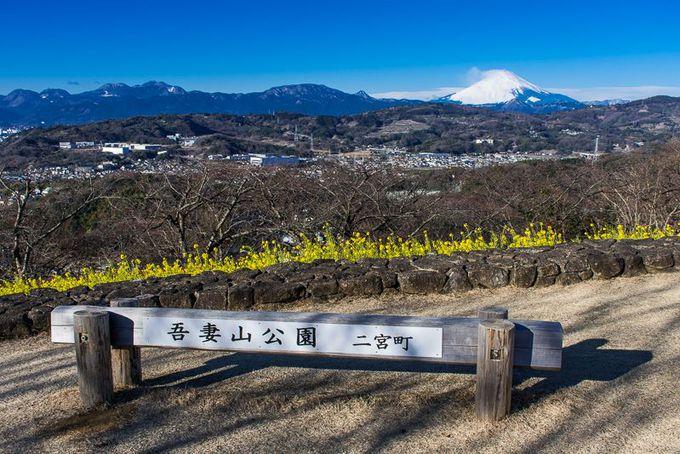 神奈川県屈指の絶景スポット「吾妻山公園」