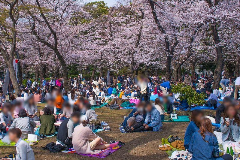 江戸時代から桜の名所!「上野公園」