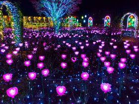 「あしかがフラワーパーク」のイルミネーション「光の花の庭」は全国第1位の輝き!