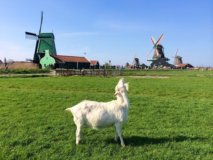オランダ発の春便り!かわいい風車村『ザーンセ スカンス』