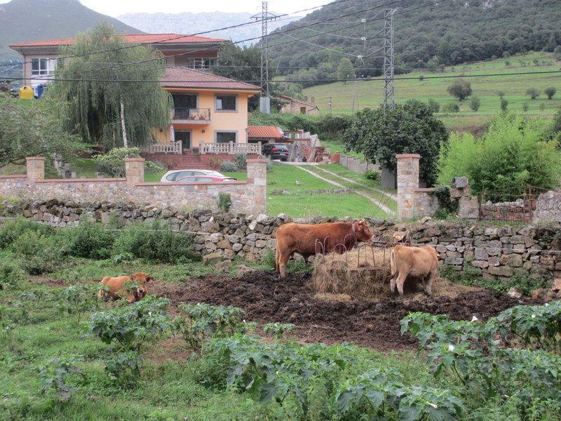 自然が溢れるアレナス・デ・カブラレス村