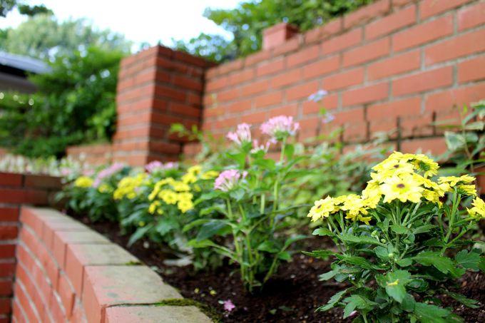 可愛く咲き誇る季節の花々